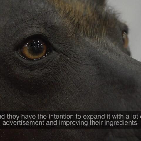 5 Royal Canin Marketing.